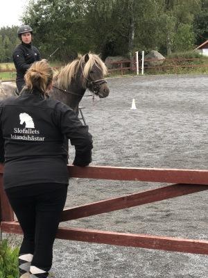 inridning häst