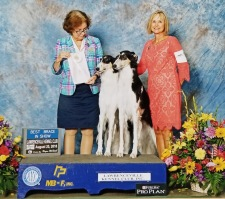 Amidala and Leia with owner/handler Melissa Steck Hundley. Pictured winning BIS Brace.