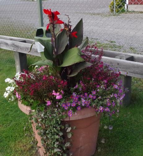 Rn vacker krukväxt vid entrén till fotbollsplanen.