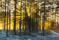 Sörmonskogen