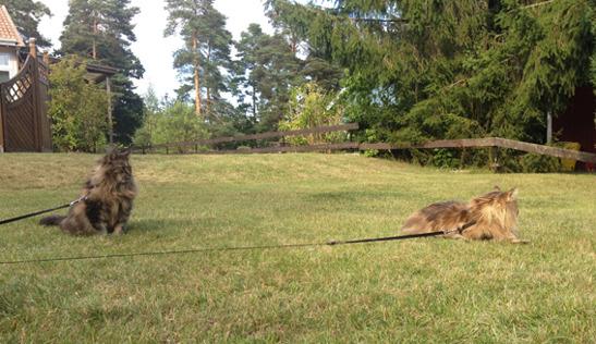 Lysithea & Pandia njuter av sommarsolen, augusti 2012.