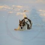 Klackebos Mysan i djup snö