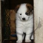 Lite läskigt att gå ut i hundgården förta gången