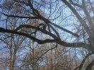 Här hade en gren blivit uppsagd och skulle flytta ner!