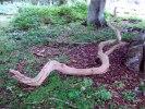 Är det en orm?