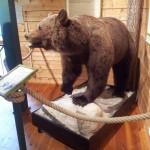 Björnen är det enda djur som inte finns i området.