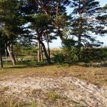Utsikt från Tofta strand.