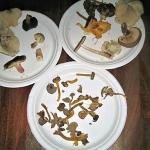 ... om svamparna!