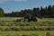 Här strängar vi gräset så att det luftas och blir lätt att köra upp