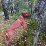 maggan_skog