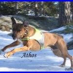 Athos 5
