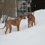 Athos & Dinnie - 20 Februari 2013 006