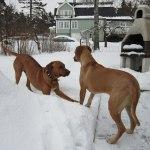 Athos & Dinnie - 20 Februari 2013 014