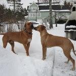 Athos & Dinnie - 20 Februari 2013 015