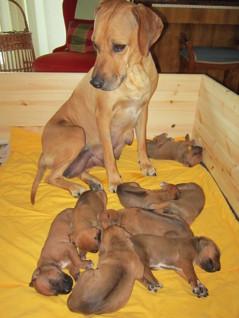 Bästa mamman - tittar till sina små hjärtan