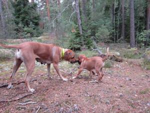 Dinnie & Diva i skogen 17 Augusti
