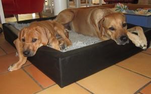 Diva vilar med mamma Dinnie 26 Augusti