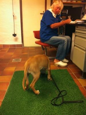 Diva hos veterinär Maud