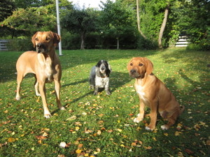 Dinnie, Candy & Diva 10 September