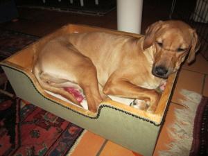 Diva trivs fortfarande bra i Candy´s säng :-)