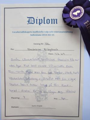 Diva - Diplom