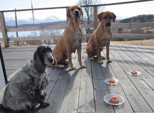 Candy, Dinnie & Diva