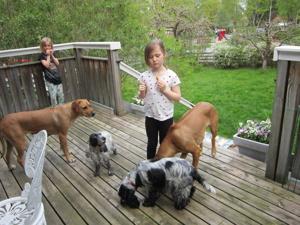 Barn & hundar