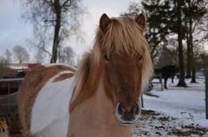 Freyja i vintras