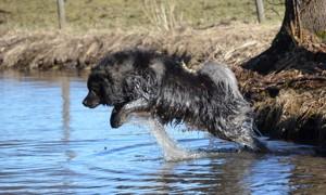 Gizmo tar ett hopp ut i vattnet