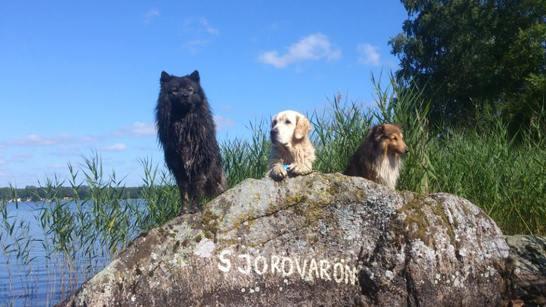 """Tre söta hundar på """"Sjörövarön"""""""