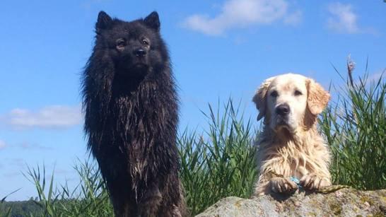 Gizmo och Desmond spanar på vattenfåglar...