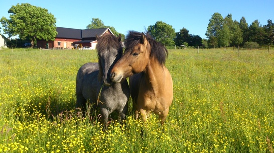 Dáti och Freyr