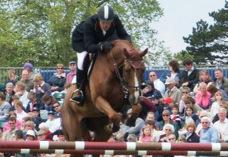MSM häst träning