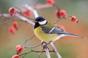 Jordnötsstrumpa till fåglar