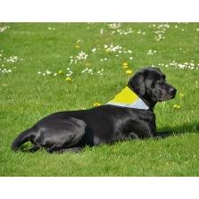 Reflexscarf för hund - Halva priset