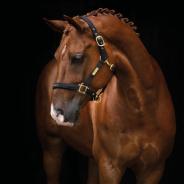 Grimma HS The Equestrian Life Svart