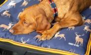 Digby & Fox Hundbädd - vattentätt material