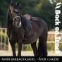 Back on Track Naim Barbackasadel