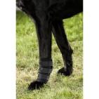 Hundbenskydd - Back on Track