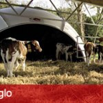 produkter_iglo