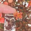 Coconut Jaspis handpolerad sten 35x19mm