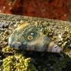 Ocean jaspis polerad sten 46x31mm