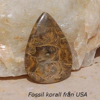 Fossil korall Jasper sten från USA 49x33mm