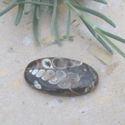 Turritella sten 28x15mm