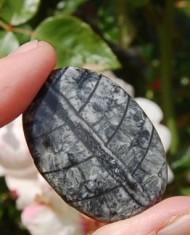 Orthoceras Fossil sten