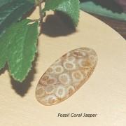 Fossil Jaspis Coral cab 42x20mm
