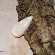 Scolecite sten flatback 25x12mm