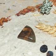 Boulder Koroit Opal sten 27x22mm