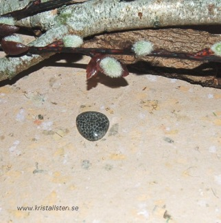 Korall Jaspis grå/svart, flatback  19x17mm