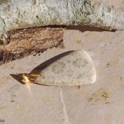 Fossil korall Jaspis sten 30x23mm med hållare